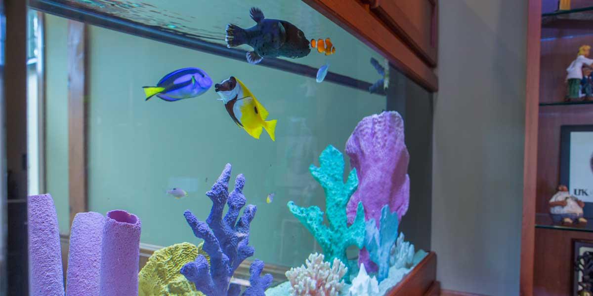 DR9A0653-Aquarium